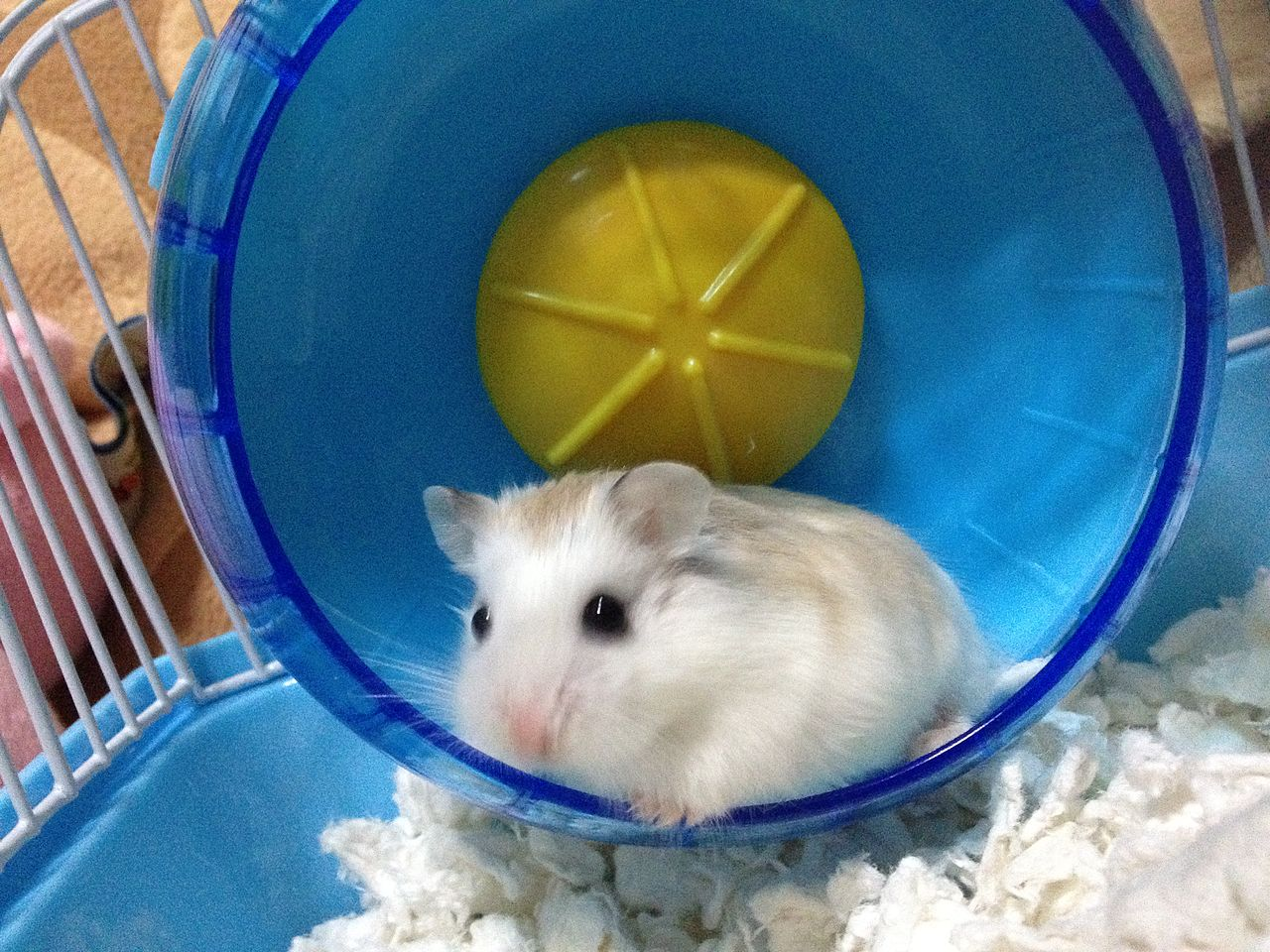 It is your hamster wheel so jump off any time